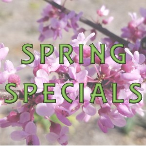 Seasonal & Holiday Specials Specials